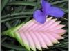 blomst-iv
