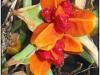 blomst-ix