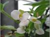 blomst-v