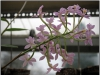 blomst-vi