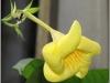 blomst-viii