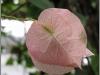 blomst-xiii