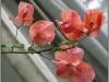 blomst-xiv