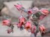 blomst-xvii