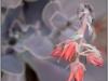 blomst-xviii