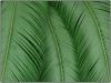 palme-iii