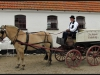 Diary 2011-05-28 Hest og vogn