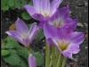 Diary 2011-09-10 - Botanisk Have - Noegne Jomfruer