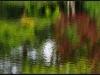 Diary 2011-09-10 - Botanisk Have - Spejling