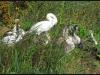 Diary 2011-10-01 - De grimme aellinger