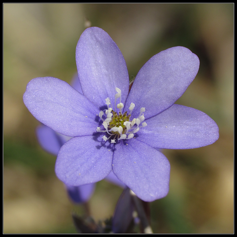 diary-2012-03-25-anemone