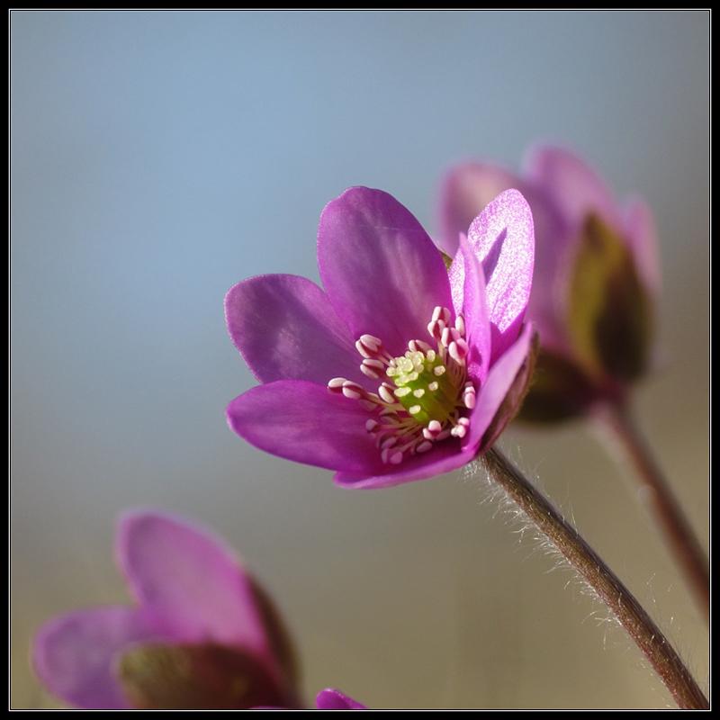 diary-2012-03-25-anemone-vi