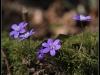diary-2012-03-25-anemone-viii