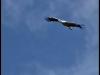 diary-2012-06-03-stork-iv