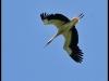 diary-2012-06-03-stork-ix