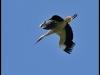 diary-2012-06-03-stork-viii