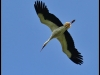 diary-2012-06-03-stork-x
