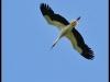 diary-2012-06-03-stork-xi
