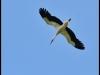 diary-2012-06-03-stork-xii