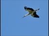 diary-2012-06-03-stork-xiii