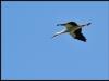 diary-2012-06-03-stork-xiv
