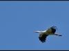 diary-2012-06-03-stork-xv