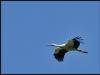 diary-2012-06-03-stork-xvi
