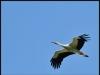 diary-2012-06-03-stork-xvii