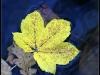 diary-2012-11-11-xviii