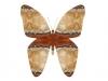 trae-sommerfug-2