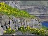 Faroe Islands 2011 - Omgivelser XX