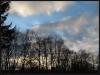 Fuglereservatet 2011-03-22 III