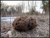 Fuglereservatet 2011-03-22 IV