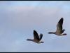 Fuglereservatet 2011-03-22 IX