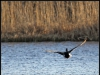 Fuglereservatet 2011-03-22 VI