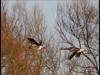 Fuglereservatet 2011-03-22 VII