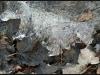 Fuglereservatet 2011-03-22 VIII