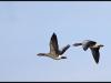 Fuglereservatet 2011-03-22 X
