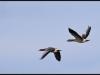 Fuglereservatet 2011-03-22 XI
