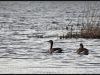Fuglereservatet 2011-03-22 XIX