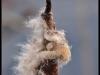 Fuglereservatet 2011-03-22 XVII