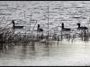 Fuglereservatet 2011-03-22 XVIII