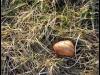 Fuglereservatet 2011-03-22