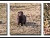 Fuglereservatet 2011-03-27 - Mink
