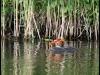 Fuglereservatet 2011-06-13