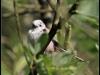 Fuglereservatet 2011-06-19 VI