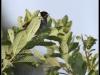 Fuglereservatet 2011-06-19 VII