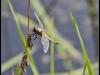 Fuglereservatet 2011-07-03 XIII