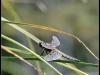 Fuglereservatet 2011-07-03 XIV