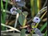 Fuglereservatet 2011-08-21 - Flora III